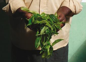 the-vert-menthe-reglisse-citronnelle-srilanka-equitable-bio