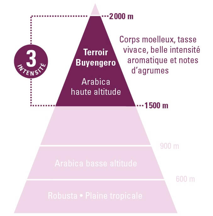 terroir café burundi bio équitable