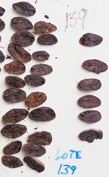 haïti test a la coupe fève cacao bio equitable ethiquable