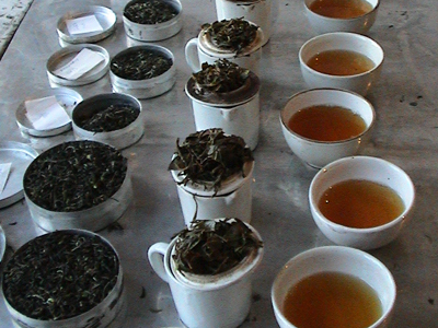 thé darjeeling potong