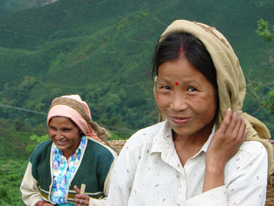 thé potong tea garden ethiquable darjeeling bio équitable