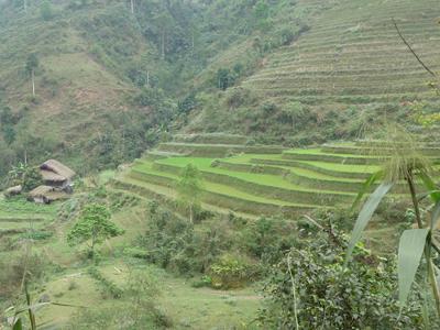 the_vert_equitable_bio_ethiquable_vietnam