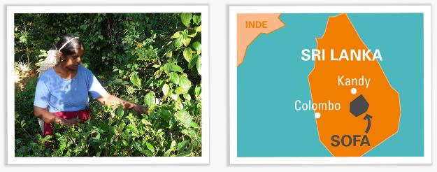 the vert agrumes bio du sri lanka issu du commerce equitable