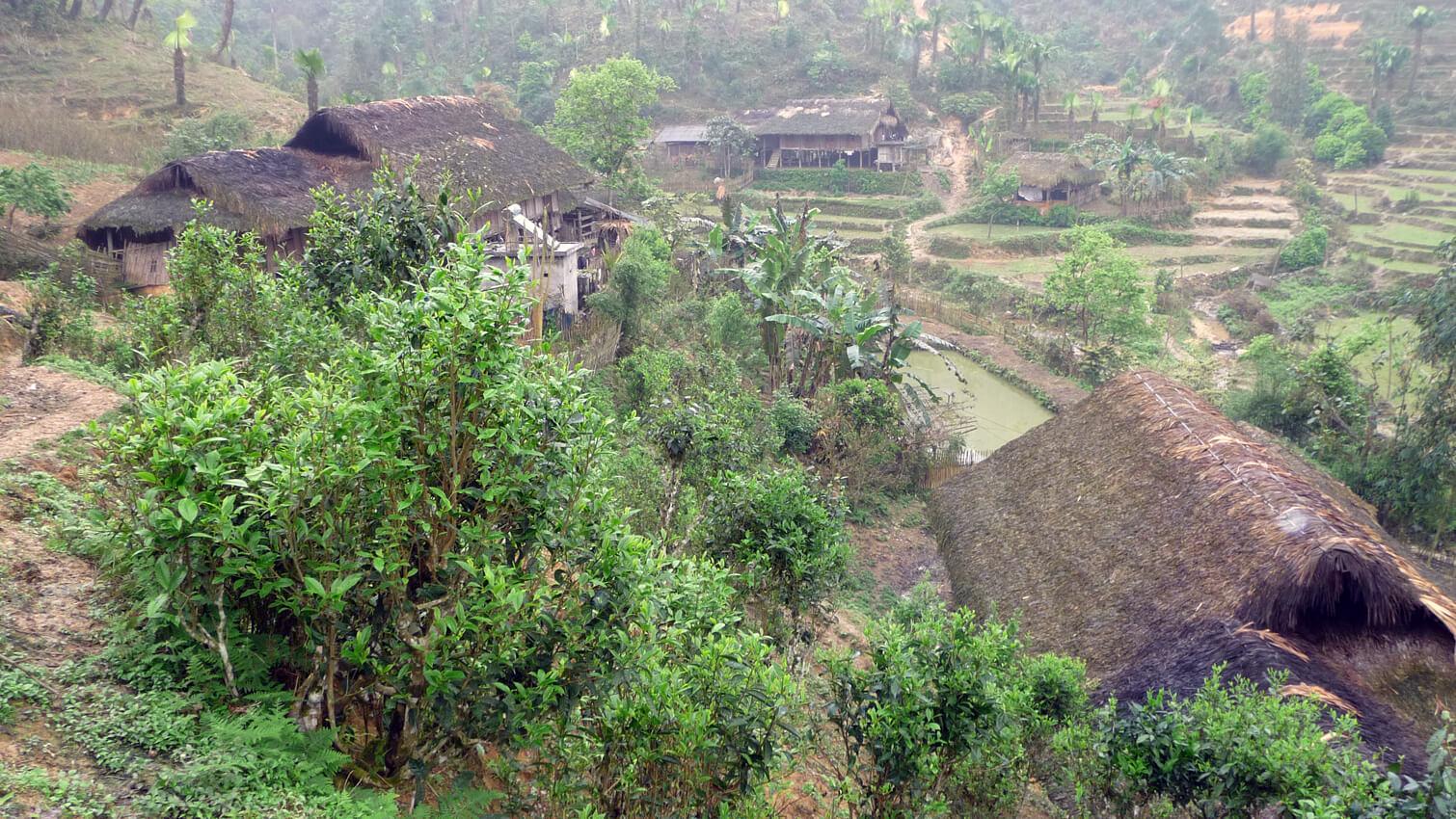 ETHIQUABLE thé vert vietnam